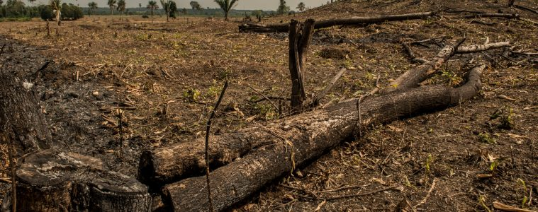 The Rainforest Alliance's response to EU Communication on deforestation